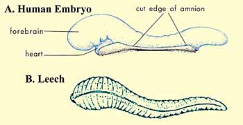 The_Quran_on_Human_Embryonic_Development_001