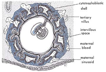 The_Quran_on_Human_Embryonic_Development_002