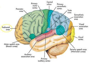 The_Quran_on_the_Cerebrum_002