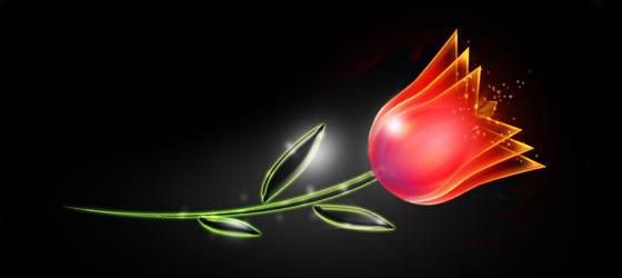 roseglowing