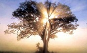 tree-sunlight_small