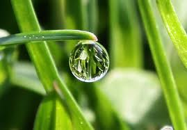 morningdewdrop