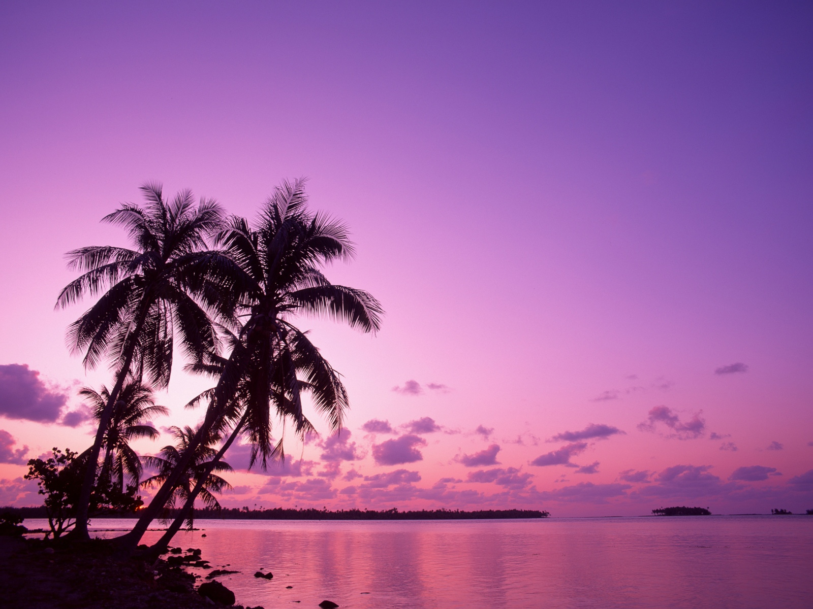 pink-sunset-wallpapers