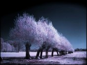 beautiful-infrared-photography